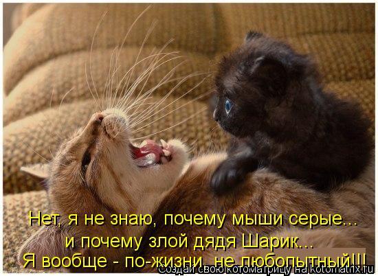 Котоматрица: Нет, я не знаю, почему мыши серые... и почему злой дядя Шарик... Я вообще - по-жизни, не любопытный!!!