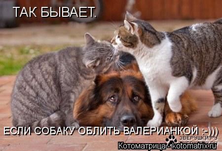 Котоматрица: ТАК БЫВАЕТ. ЕСЛИ СОБАКУ ОБЛИТЬ ВАЛЕРИАНКОЙ :-)))