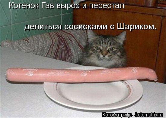 Котоматрица: Котёнок Гав вырос и перестал делиться сосисками с Шариком.
