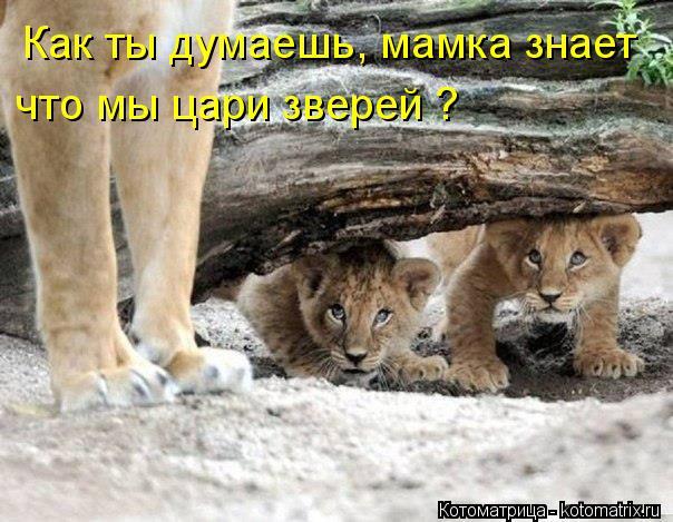 Котоматрица: Как ты думаешь, мамка знает что мы цари зверей ?