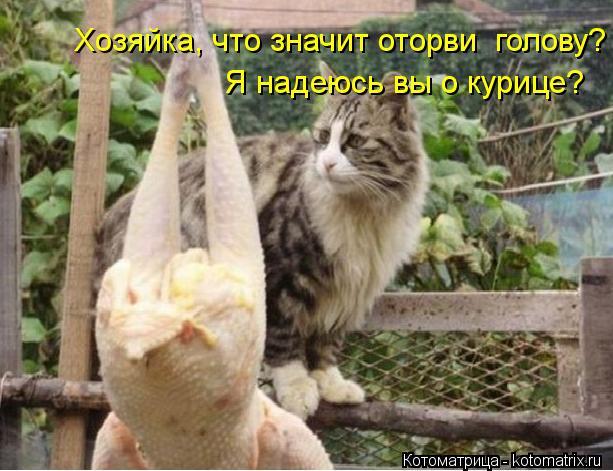 Котоматрица: Хозяйка, что значит оторви  голову? Я надеюсь вы о курице?