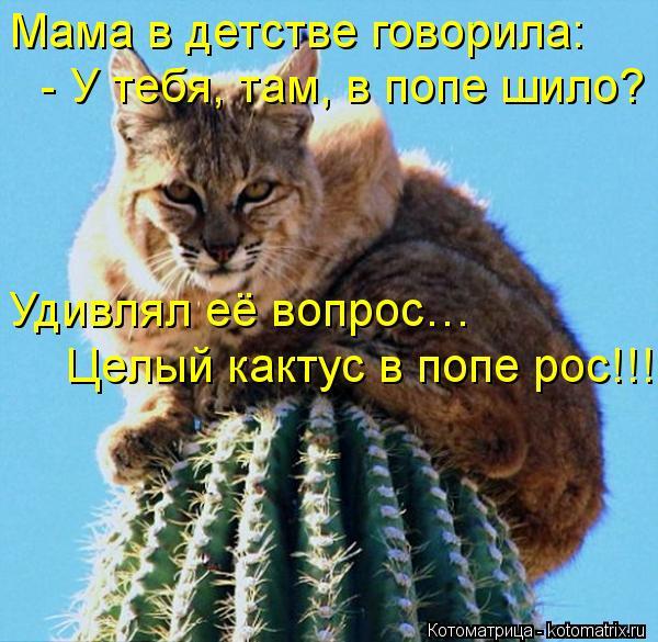 Котоматрица: Мама в детстве говорила: - У тебя, там, в попе шило? Удивлял её вопрос…  Целый кактус в попе рос!!!