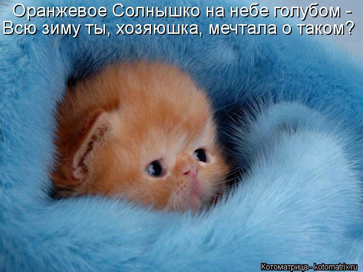 Котоматрица: Оранжевое Солнышко на небе голубом -  Всю зиму ты, хозяюшка, мечтала о таком?