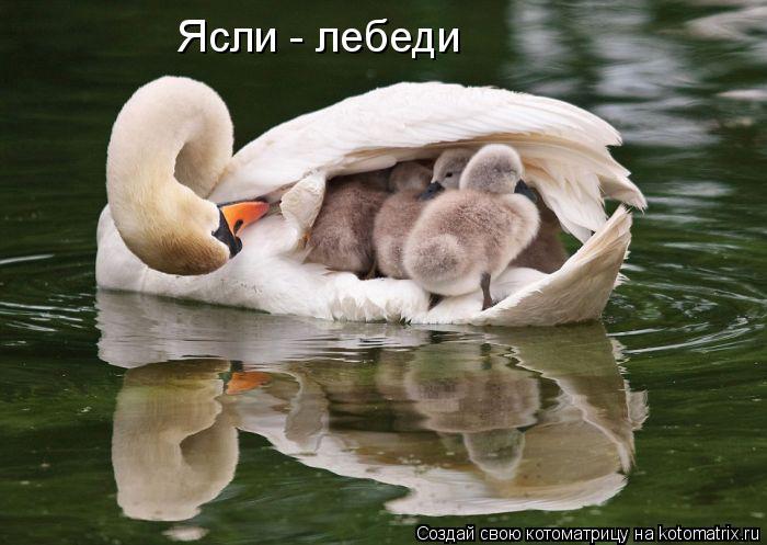 Котоматрица: Ясли - лебеди