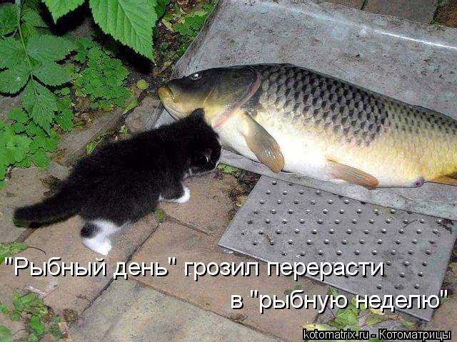 """Котоматрица: """"Рыбный день"""" грозил перерасти  в """"рыбную неделю"""""""