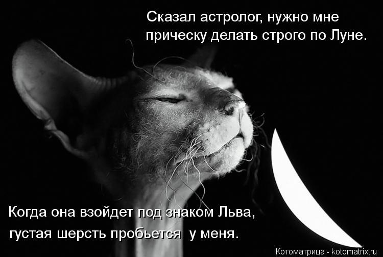 Котоматрица: прическу делать строго по Луне. Сказал астролог, нужно мне Когда она взойдет под знаком Льва, густая шерсть пробьется  у меня.