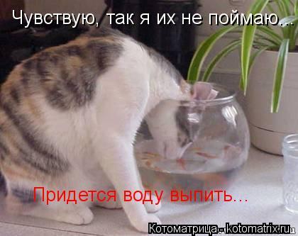 Котоматрица: Чувствую, так я их не поймаю... Придется воду выпить...