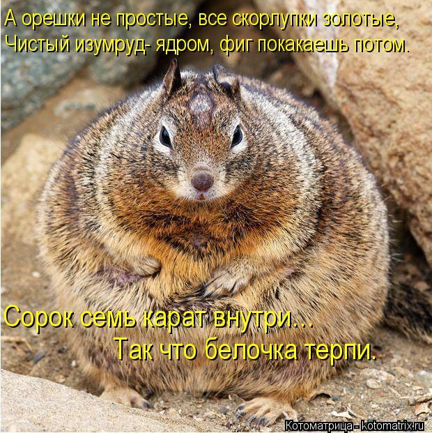 Котоматрица: А орешки не простые, все скорлупки золотые, Чистый изумруд- ядром, фиг покакаешь потом. Сорок семь карат внутри… Так что белочка терпи.
