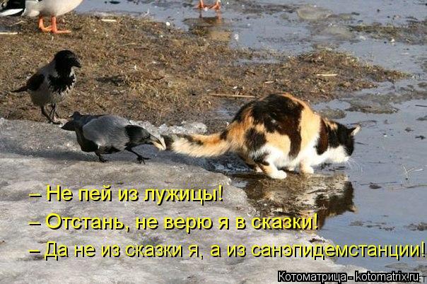 Котоматрица: – Не пей из лужицы! – Отстань, не верю я в сказки! – Да не из сказки я, а из санэпидемстанции!
