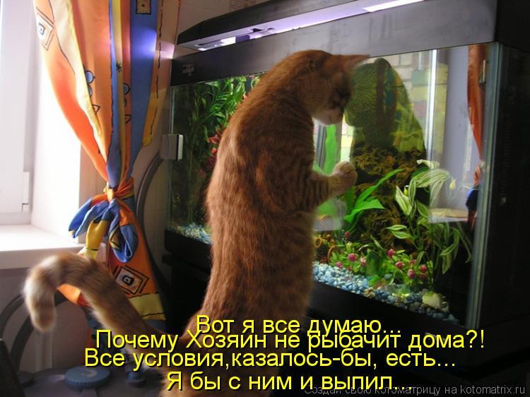 Котоматрица: Вот я все думаю... Почему Хозяин не рыбачит дома?! Все условия,казалось-бы, есть... Я бы с ним и выпил...