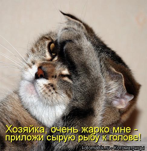 Котоматрица: Хозяйка, очень жарко мне - приложи сырую рыбу к голове!
