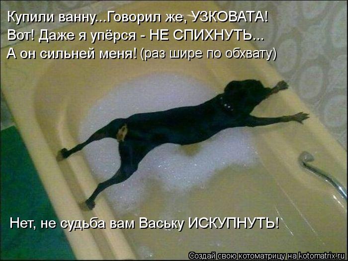 Котоматрица: Купили ванну...Говорил же, УЗКОВАТА! Вот! Даже я упёрся - НЕ СПИХНУТЬ... А он сильней меня! (раз шире по обхвату) Нет, не судьба вам Ваську ИСКУПН