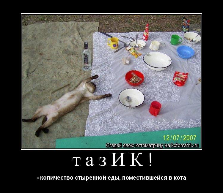 Котоматрица: тазИК! - количество стыренной еды, поместившейся в кота