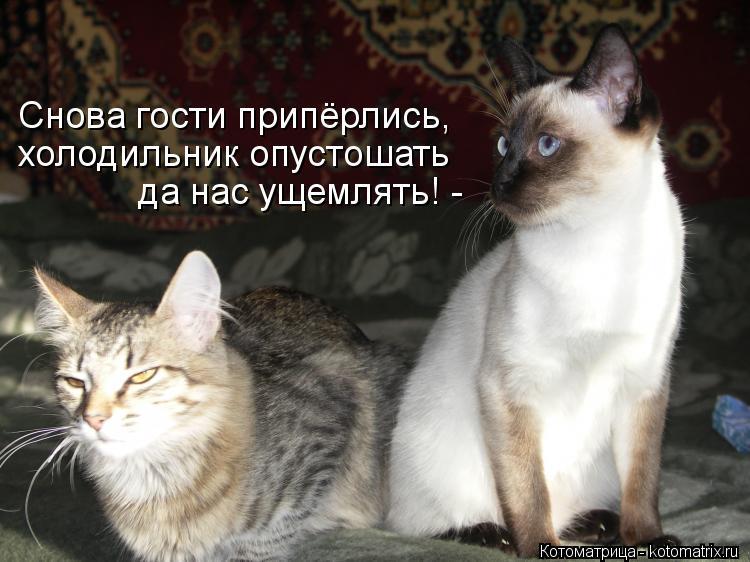 kotomatritsa_1I.jpg
