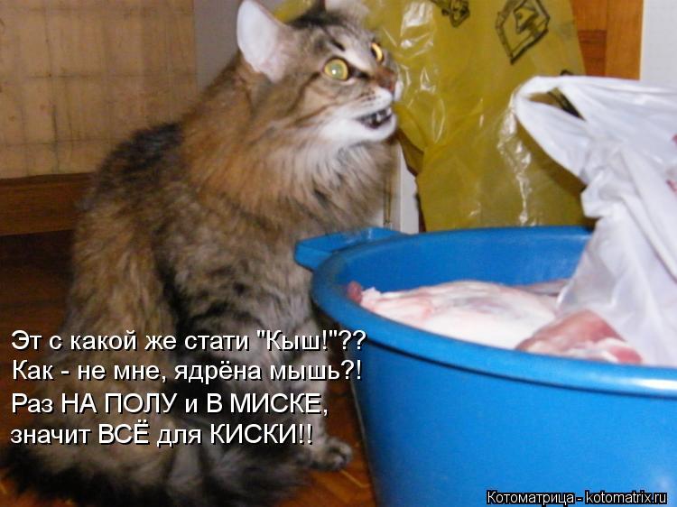 """Котоматрица: Эт с какой же стати """"Кыш!""""?? Как - не мне, ядрёна мышь?! Раз НА ПОЛУ и В МИСКЕ, значит ВСЁ для КИСКИ!!"""