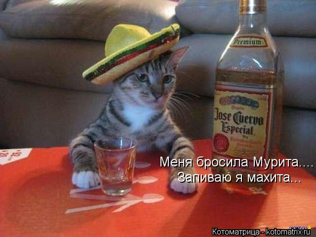 Котоматрица: Меня бросила Мурита.... Запиваю я махита...