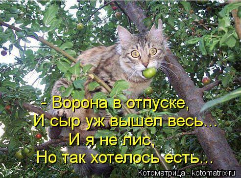 Котоматрица: - Ворона в отпуске,  И сыр уж вышел весь... И я не лис,  Но так хотелось есть...