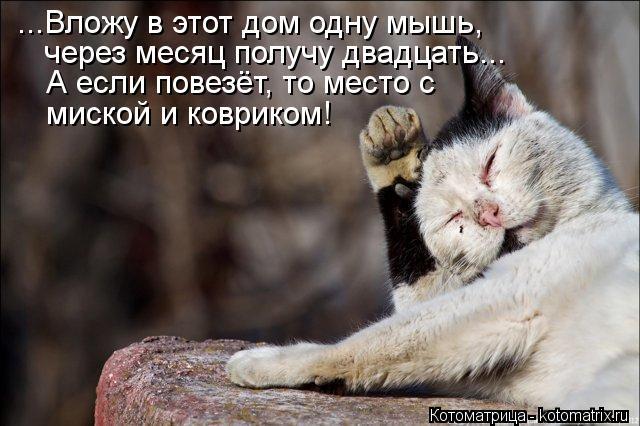 Котоматрица: ...Вложу в этот дом одну мышь, через месяц получу двадцать... А если повезёт, то место с миской и ковриком!