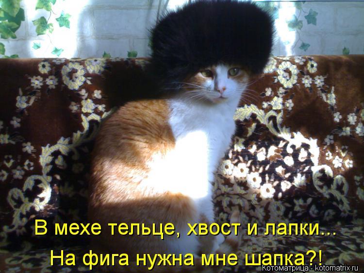 Котоматрица: В мехе тельце, хвост и лапки... На фига нужна мне шапка?!