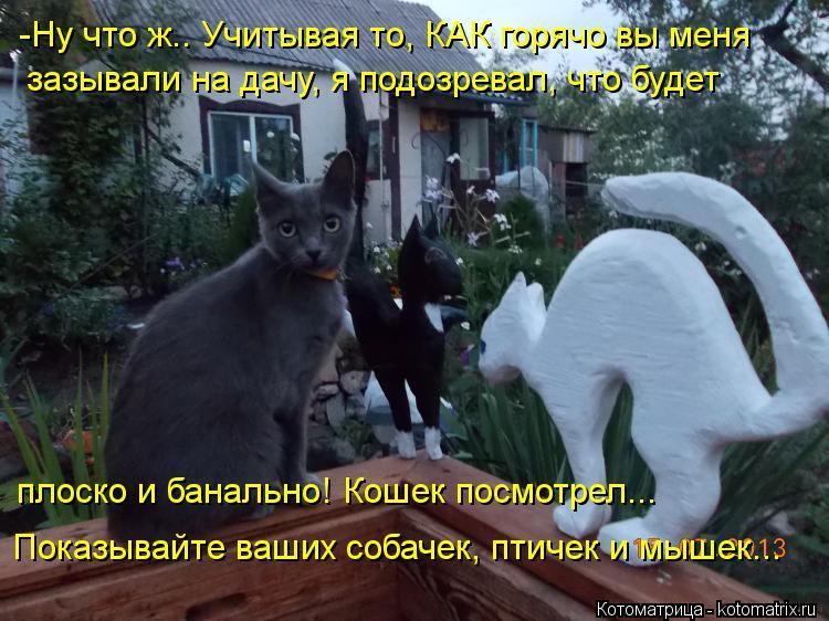 Котоматрица: -Ну что ж.. Учитывая то, КАК горячо вы меня зазывали на дачу, я подозревал, что будет  плоско и банально! Кошек посмотрел... Показывайте ваших с
