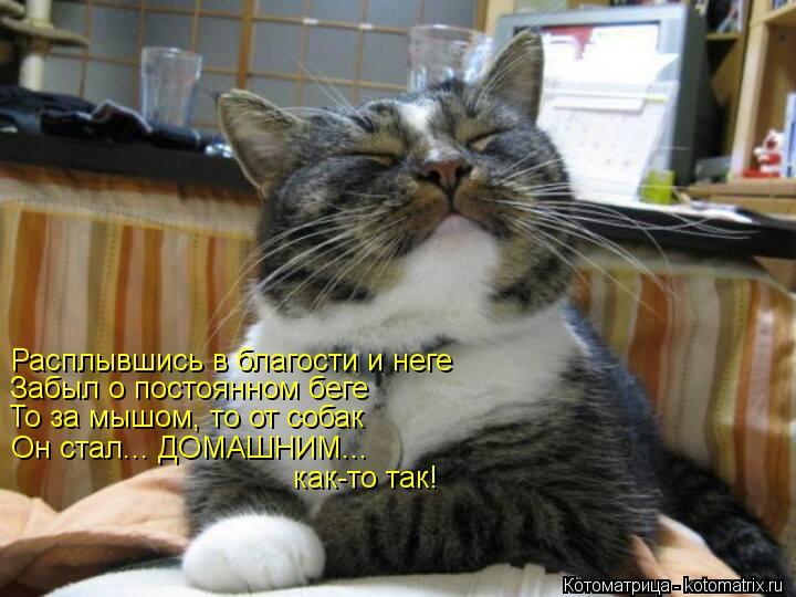 Котоматрица: Расплывшись в благости и неге   Забыл о постоянном беге  То за мышом, то от собак  Он стал... ДОМАШНИМ...  как-то так!