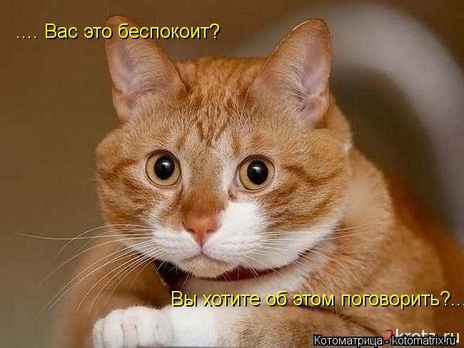 kotomatritsa_U.jpg