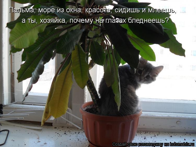 Котоматрица: Пальма, море из окна, красота, сидишь и млеешь, а ты, хозяйка, почему на глазах бледнеешь?