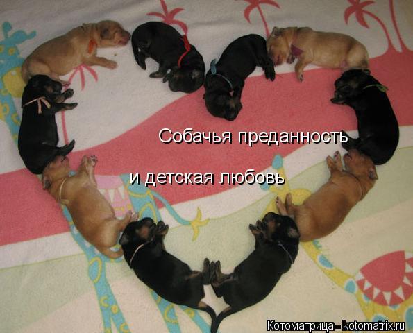 Котоматрица: Собачья преданность и детская любовь