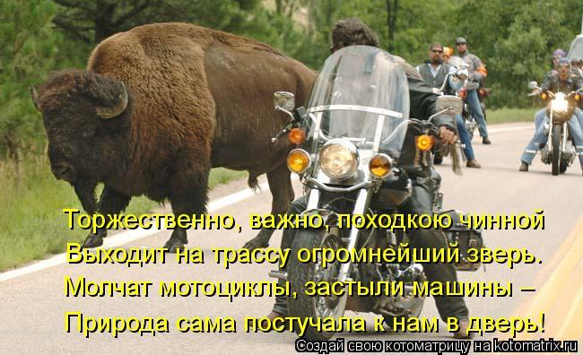 Котоматрица: Торжественно, важно, походкою чинной Выходит на трассу огромнейший зверь. Молчат мотоциклы, застыли машины – Природа сама постучала к нам