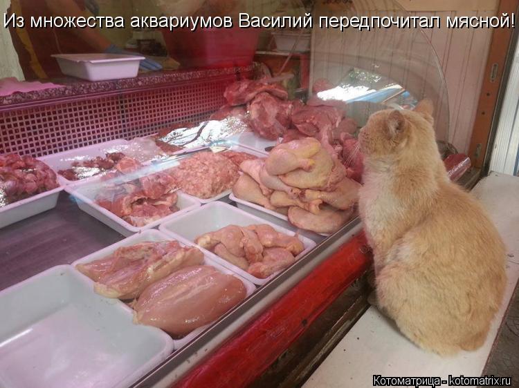 Котоматрица: Из множества аквариумов Василий передпочитал мясной!