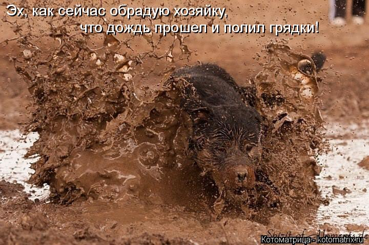 Котоматрица: Эх, как сейчас обрадую хозяйку,   что дождь прошел и полил грядки!