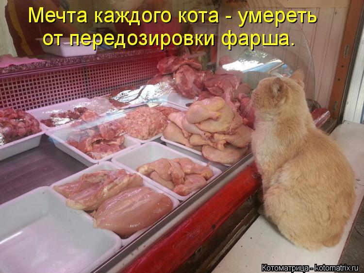 Котоматрица: Мечта каждого кота - умереть от передозировки фарша.