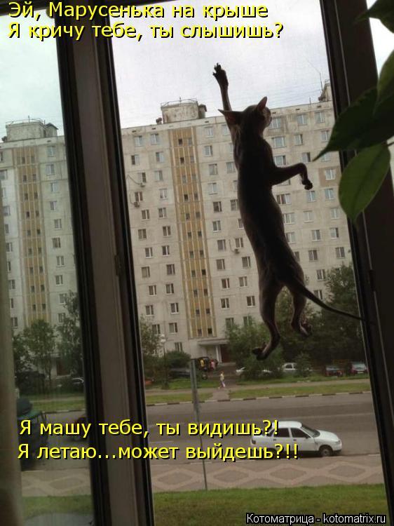 Котоматрица: Эй, Марусенька на крыше Я кричу тебе, ты слышишь? Я машу тебе, ты видишь?! Я летаю...может выйдешь?!!