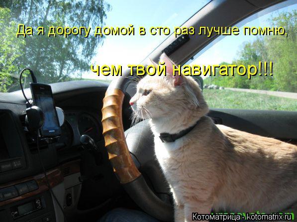 Котоматрица: Да я дорогу домой в сто раз лучше помню, чем твой навигатор!!!