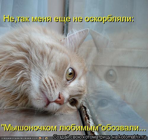 """Котоматрица: """"Мышоночком любимым""""обозвали... Не,так меня еще не оскорбляли:"""