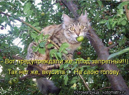 Котоматрица: - Вот предупреждали же: плод запретный!!! Так нет же, вкусила...  На свою голову.