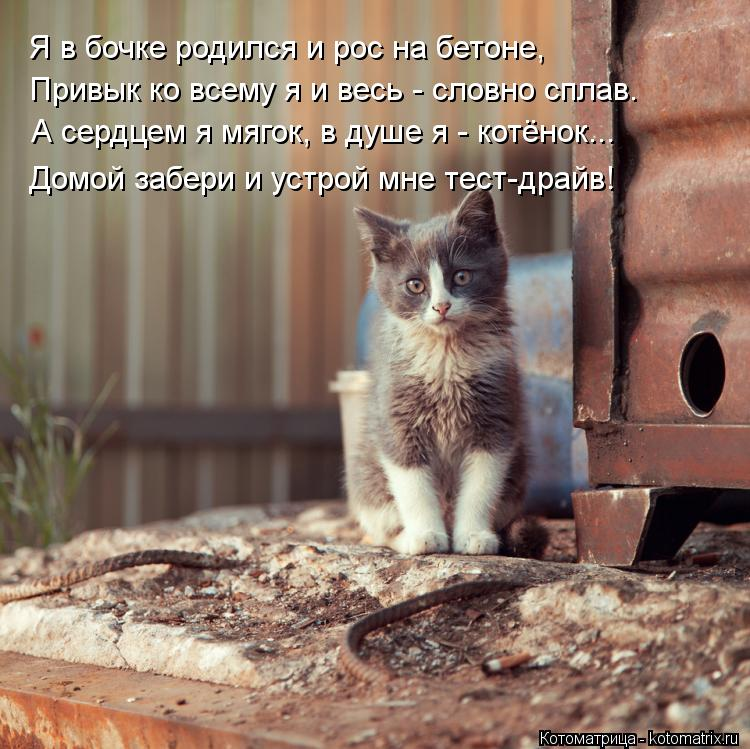 Котоматрица: Я в бочке родился и рос на бетоне, А сердцем я мягок, в душе я - котёнок... Привык ко всему я и весь - словно сплав. Домой забери и устрой мне тест