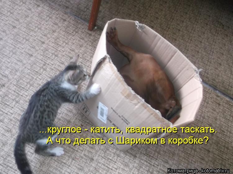 Котоматрица: ...круглое - катить, квадратное таскать. А что делать с Шариком в коробке?