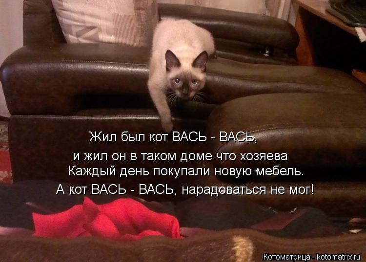 Котоматрица: Жил был кот ВАСЬ - ВАСЬ, и жил он в таком доме что хозяева Каждый день покупали новую мебель.  А кот ВАСЬ - ВАСЬ, нарадоваться не мог!