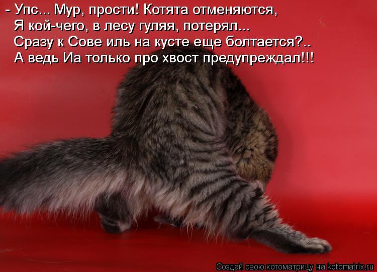 Котоматрица: - Упс... Мур, прости! Котята отменяются, Я кой-чего, в лесу гуляя, потерял... Сразу к Сове иль на кусте еще болтается?.. А ведь Иа только про хвост