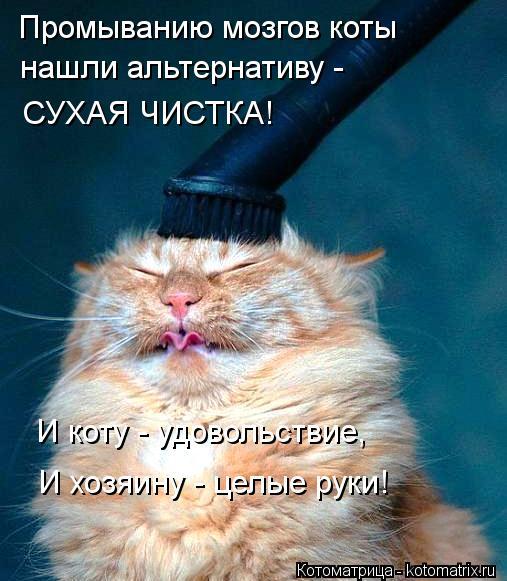 Котоматрица: Промыванию мозгов коты нашли альтернативу -  СУХАЯ ЧИСТКА! И коту - удовольствие, И хозяину - целые руки!
