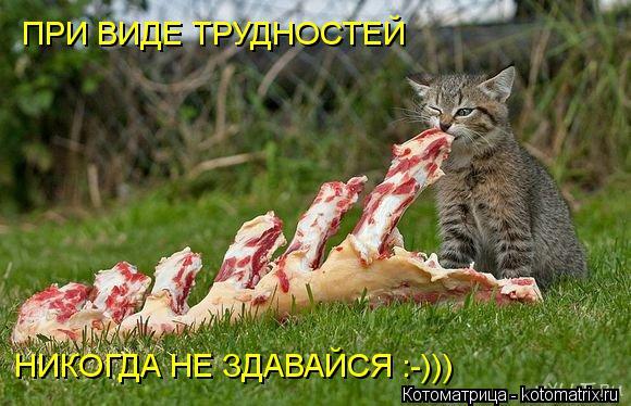 Котоматрица: ПРИ ВИДЕ ТРУДНОСТЕЙ НИКОГДА НЕ ЗДАВАЙСЯ :-)))