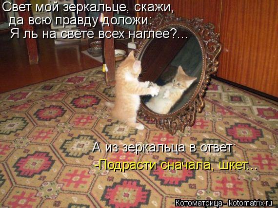 Котоматрица: Свет мой зеркальце, скажи,   да всю правду доложи:  Я ль на свете всех наглее?...  А из зеркальца в ответ:  -Подрасти сначала, шкет...