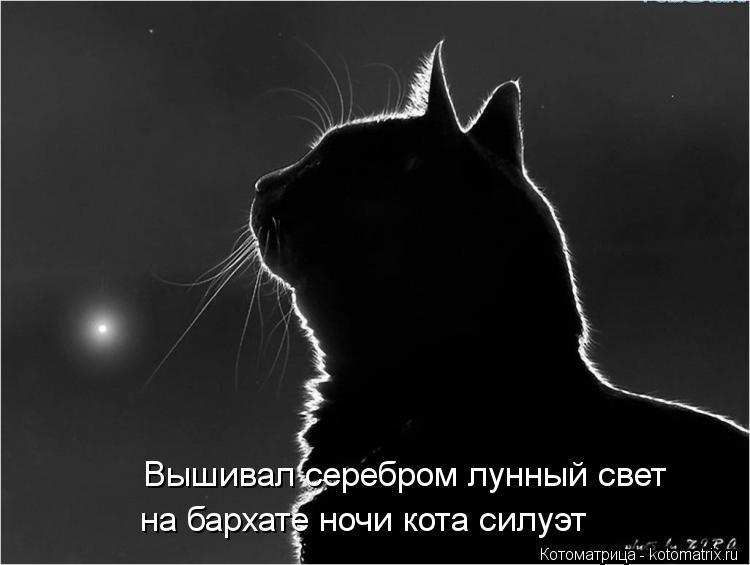 Котоматрица: Вышивал серебром лунный свет  на бархате ночи кота силуэт
