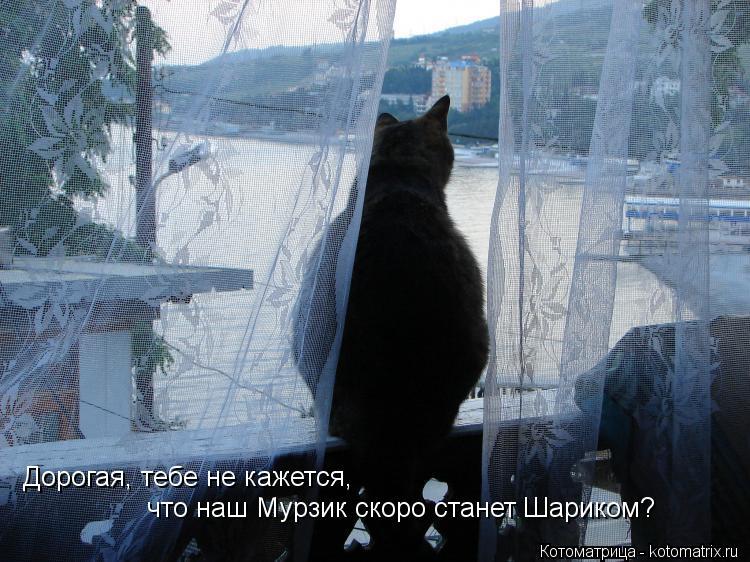 Котоматрица: Дорогая, тебе не кажется, что наш Мурзик скоро станет Шариком?