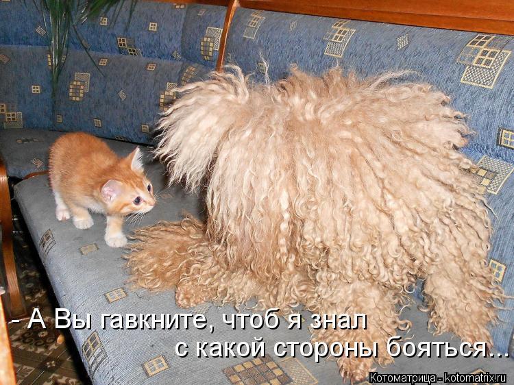 http://kotomatrix.ru/images/lolz/2013/07/20/kotomatritsa_Of.jpg