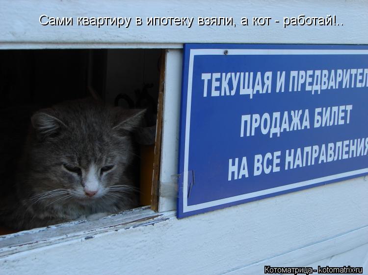 Котоматрица: Сами квартиру в ипотеку взяли, а кот - работай!..
