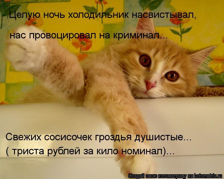 Котоматрица: Целую ночь холодильник насвистывал,  нас провоцировал на криминал... Свежих сосисочек гроздья душистые... ( триста рублей за кило номинал)...