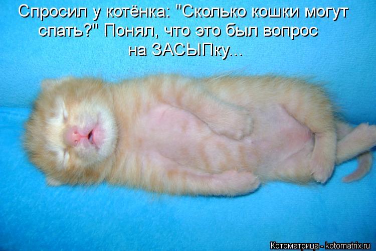 """Котоматрица: Спросил у котёнка: """"Сколько кошки могут  спать?"""" Понял, что это был вопрос на ЗАСЫПку..."""