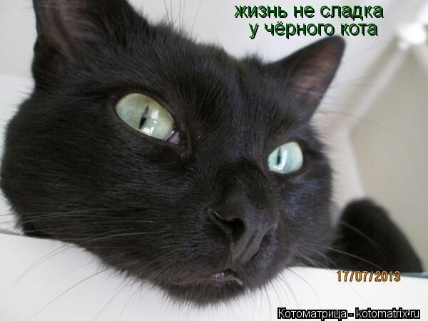 Котоматрица: жизнь не сладка у чёрного кота